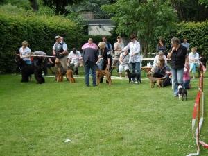Endkonkurenz der besten Terrier