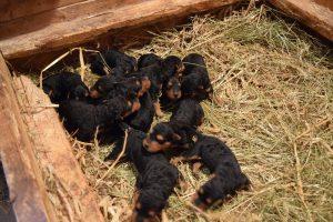 Babies im Nest